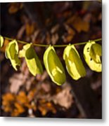 Leaves All In A Row Metal Print