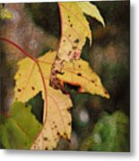 Leaves And Autumn Metal Print