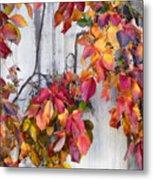 Leaves And Vines Metal Print