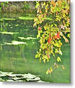 Leaves And Water Metal Print