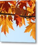 Leaves Autumn Orange Sunlit Fall Leaves Blue Sky Baslee Troutman Metal Print