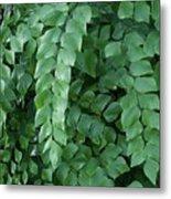 Leaves Cascading Metal Print