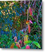 Leaves Changing Color As Autumn Approaches In Iguazu Falls National Park-argentina   Metal Print