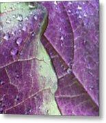 Leaves, Color,  And Dew Metal Print
