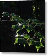 Leaves In Filtered Light  Metal Print