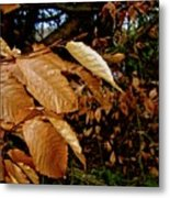 Leaves In Late Autumn Metal Print