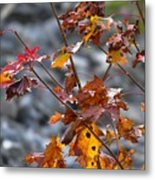 Leaves Of Fall  Metal Print