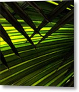 Leaves Of Palm Color Metal Print