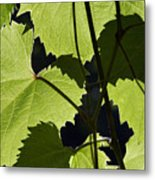 Leaves Of Wine Grape Metal Print