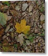 Leaves On The Rocks Metal Print