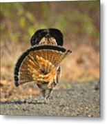 Leaving The Scene Grouse Metal Print