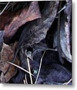 Leavings Metal Print