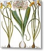 Leek And Irises, 1613 Metal Print