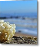 Left By The Tide Metal Print