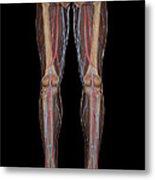 Leg Blood Supply Metal Print