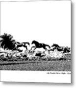 Lely Horses Metal Print