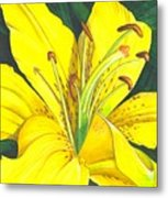 Lemon Lily Metal Print