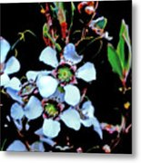 Lemon Scented Tea Tree  Metal Print