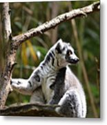 Lemur Love Metal Print