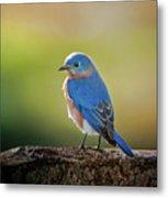 Lenore's Bluebird Metal Print