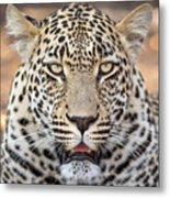 Leopard Close Up Metal Print