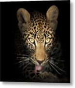 Leopard In The Dark Metal Print