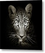 Leopard Portrait In The Dark Metal Print