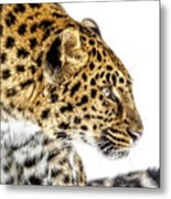 Leopard Profile Metal Print