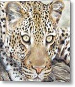 Leopard Stare Metal Print