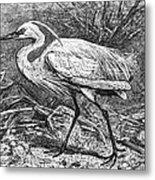 Lesser Egret Metal Print