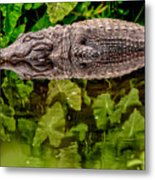 Let Sleeping Gators Lie Metal Print