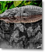 Let Sleeping Gators Lie - Mod Metal Print