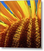 Let The Light Shine In Metal Print