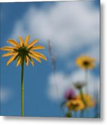 Let The Sunshine In... Metal Print