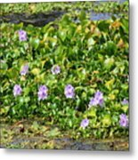 Lettuce Lake Flowers Metal Print