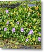 Lettuce Lake Flowers Metal Print