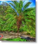 Leu Gardens Palm Metal Print