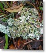 Lichen On Dead Branch Outer Banks North Carolina Usa Metal Print