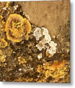 Lichen On The Piran Walls Metal Print
