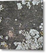 Lichen On Wood Metal Print