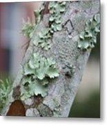 Lichens 2 Metal Print