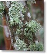 Lichens 4 Metal Print