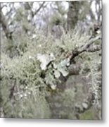 Lichens In The Plums Metal Print