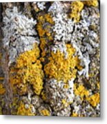 Lichens On Tree Bark Metal Print
