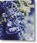 Life In The Cloud Forest Metal Print