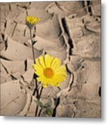 Life In The Desert Metal Print