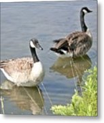 Life Is Good For Canadian Geese Metal Print