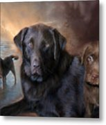 Life Of A Lab Metal Print