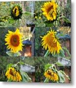 Life Of A Sunflower Metal Print
