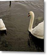 Life Of Swans. Metal Print
